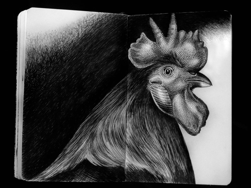 highly detailed pen and ink animal illustrations by tim jeffs (3)