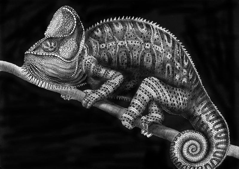 highly detailed pen and ink animal illustrations by tim jeffs (8)