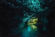 Picture of the Day: The Waitomo Glowworm Caves