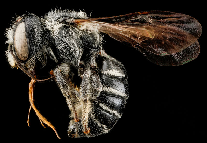 detailed macro close ups of arthropods by usgs (13)