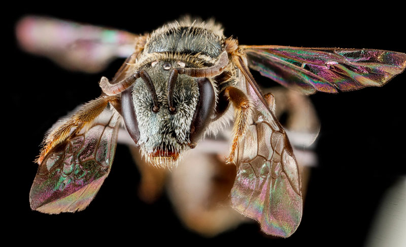 detailed macro close ups of arthropods by usgs (15)