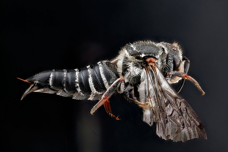 detailed macro close ups of arthropods by usgs (16)