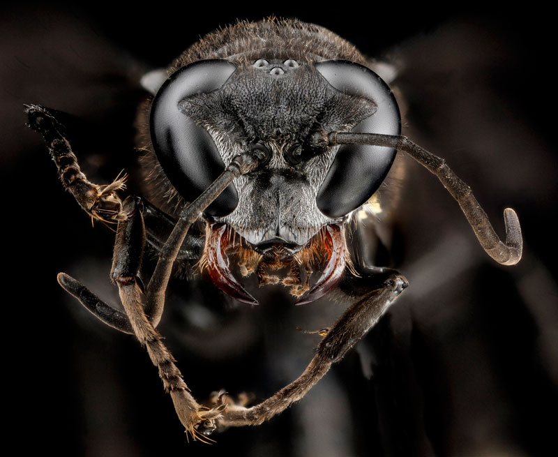 detailed macro close ups of arthropods by usgs (23)