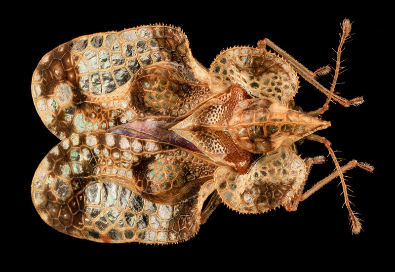detailed macro close ups of arthropods by usgs (31)