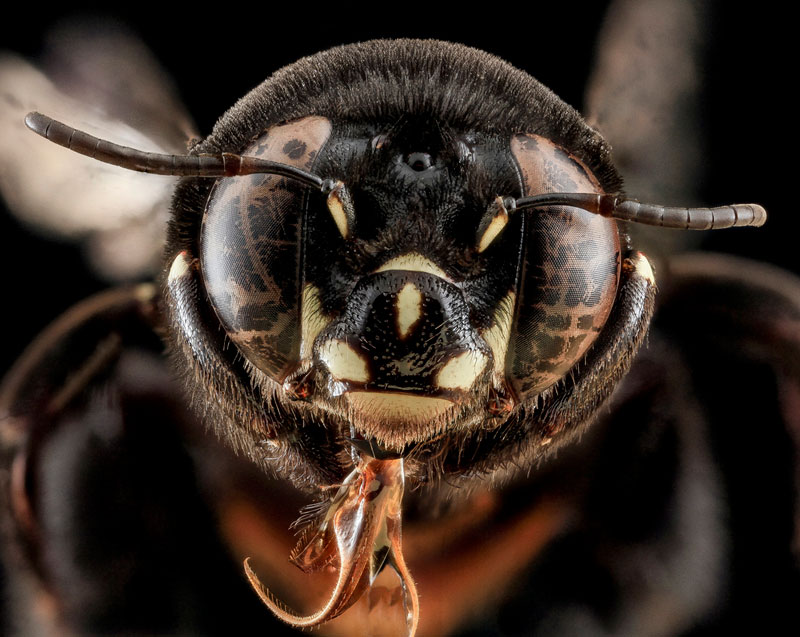 detailed macro close ups of arthropods by usgs (34)