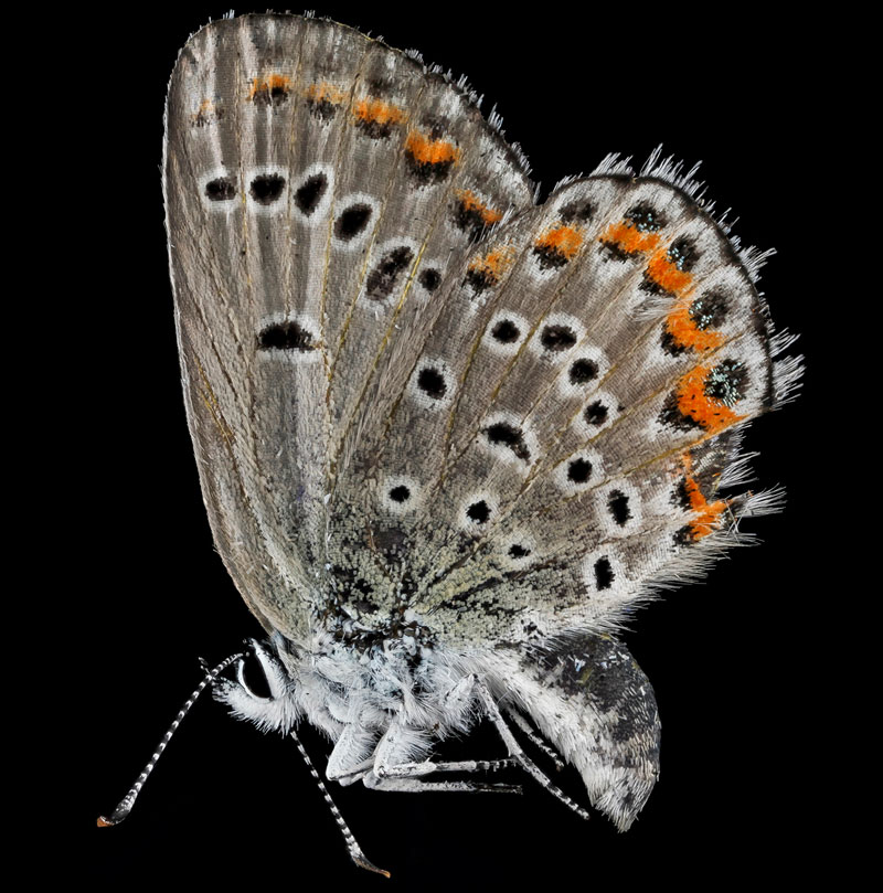 detailed macro close ups of arthropods by usgs (36)
