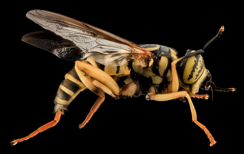 detailed macro close ups of arthropods by usgs (4)