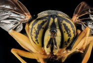The 40 Most Detailed Close-Ups of Arthropods You Will See Today