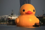 60 ft Rubber Duck Floats into Taiwan