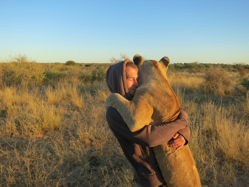 My Close Encounter with Lions in Botswana
