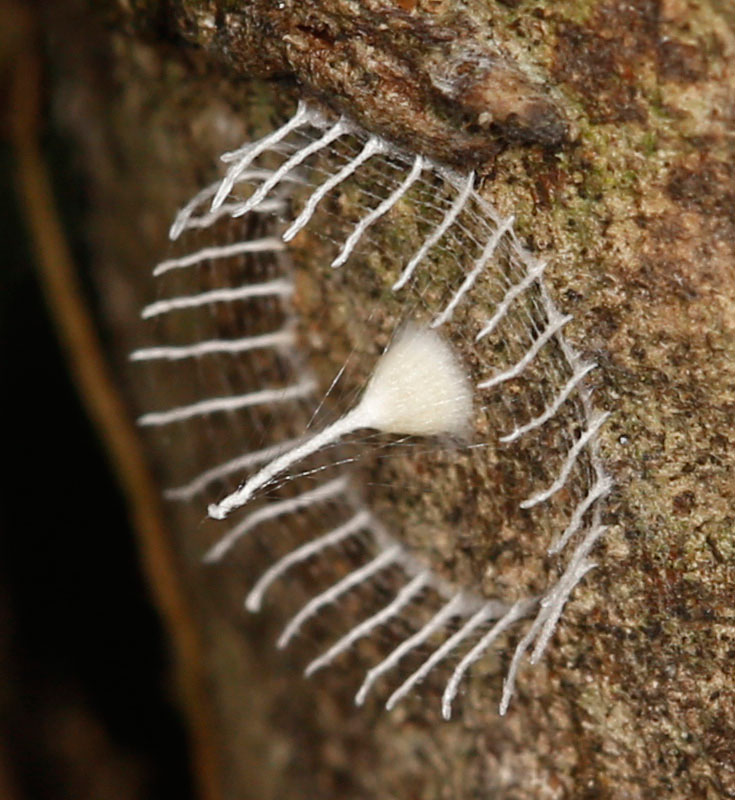 Mystery Bug Builds Fence Around Eggs and Nobody Knows Why