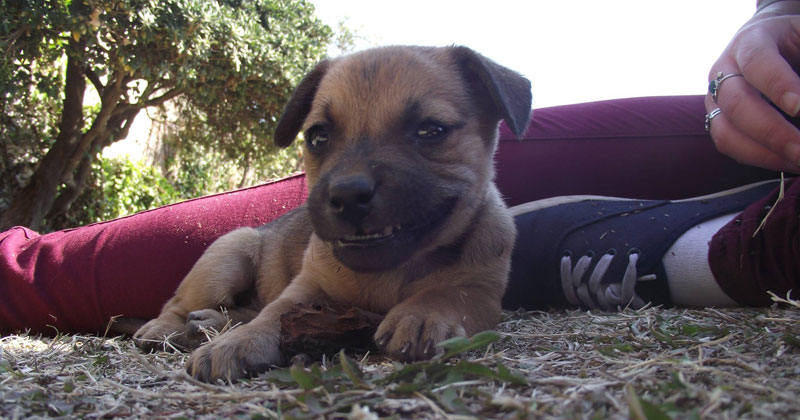 puppy grinning The Shirk Report   Volume 233