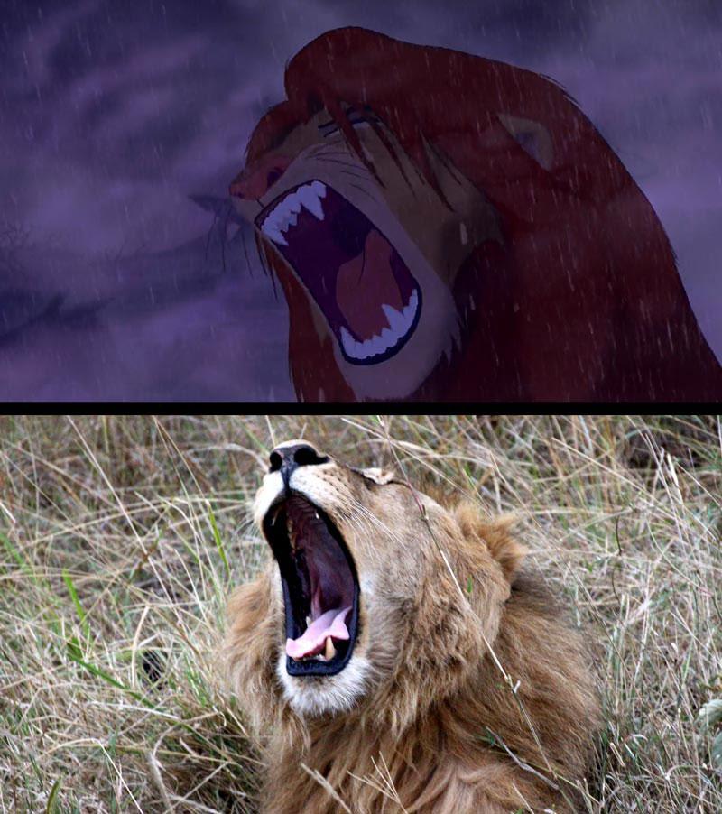 real life lion king brandon heuser (18)