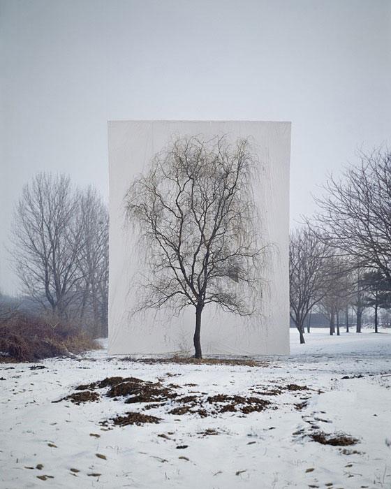 white canvas backdrops behind trees myoung ho lee (1)