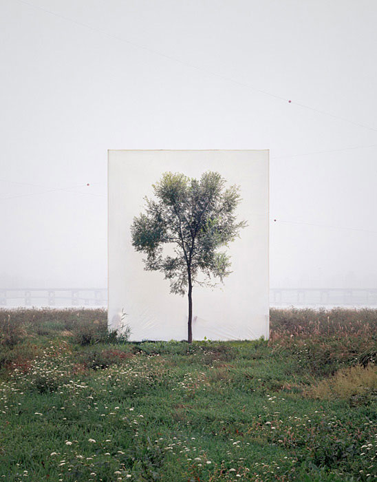 white canvas backdrops behind trees myoung ho lee (10)