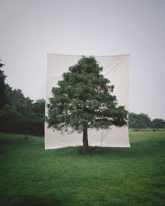white canvas backdrops behind trees myoung ho lee (2)