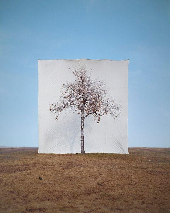 white canvas backdrops behind trees myoung ho lee (3)