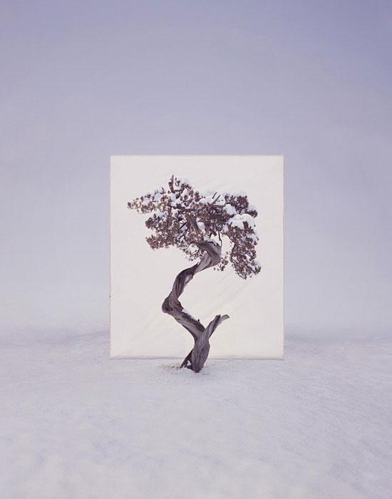 white canvas backdrops behind trees myoung ho lee (4)