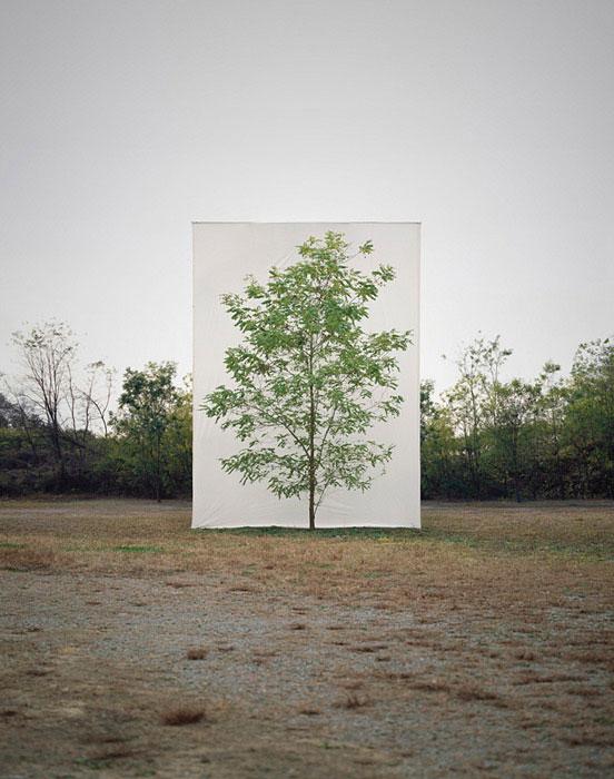 white canvas backdrops behind trees myoung ho lee (5)
