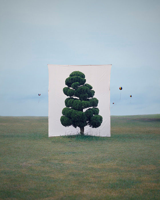 white canvas backdrops behind trees myoung ho lee (7)
