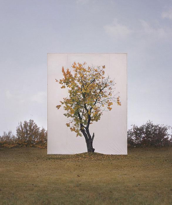 white canvas backdrops behind trees myoung ho lee (8)