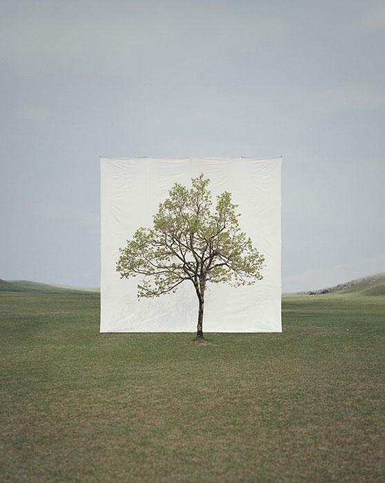 white canvas backdrops behind trees myoung ho lee (9)