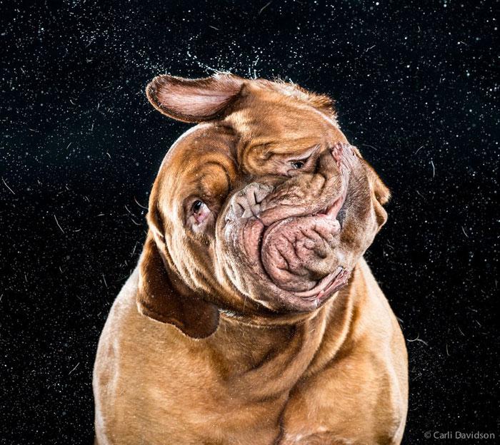 dogs mid shake by carli davidson (1)