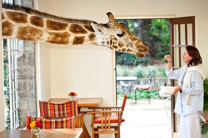 giraffe manor hotel nairobi kenya africa safari 1 This Divers Paradise is Built on a Rock and Surrounded by Reef