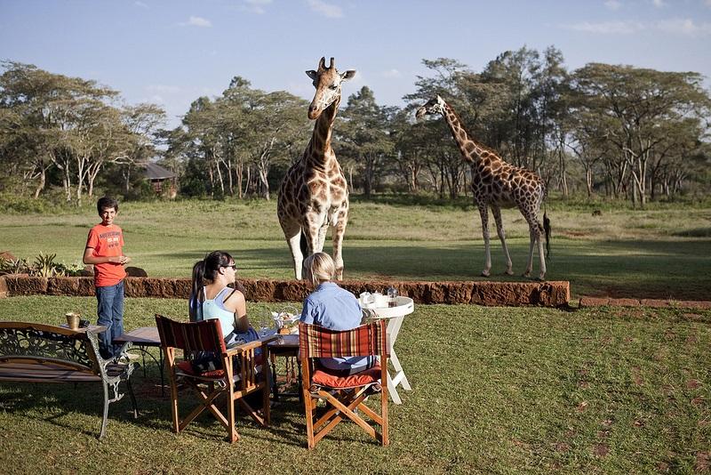 giraffe manor hotel nairobi kenya africa safari (11)