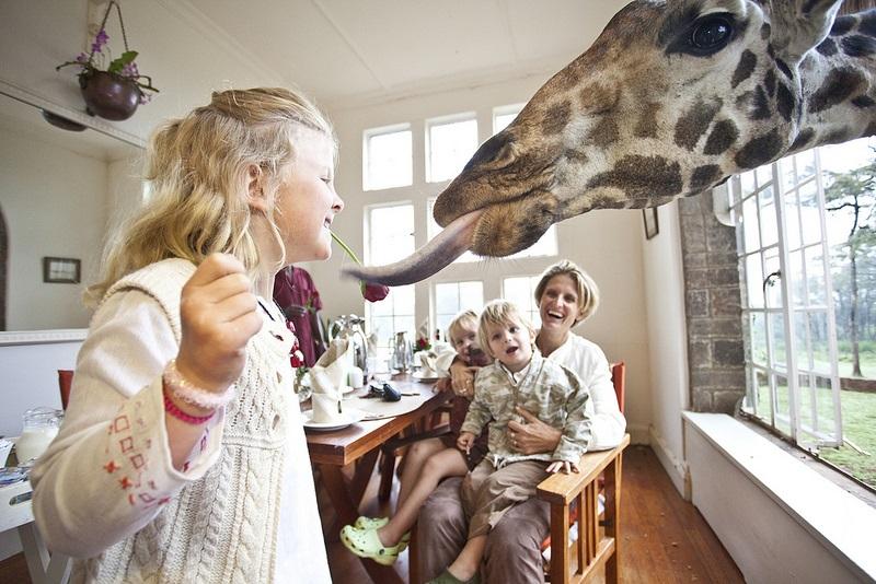 giraffe manor hotel nairobi kenya africa safari (8)
