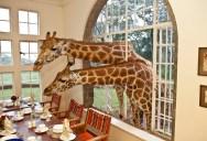 Eating Breakfast with Giraffes in Kenya