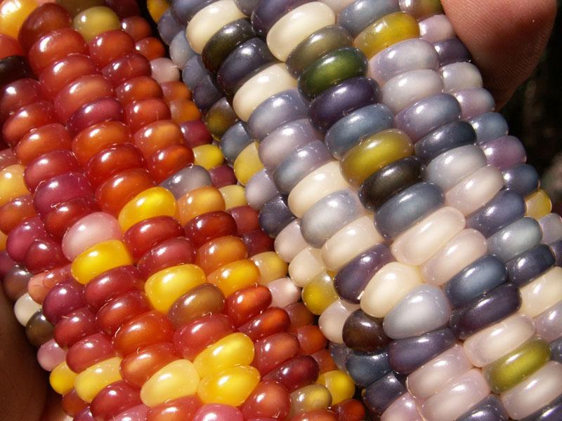 glass gem corn rainbow colored (11)