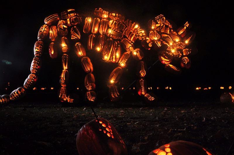 jack o lantern pumpkin triceratops