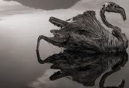 'Medusa' Lake Turns Animals to Stone