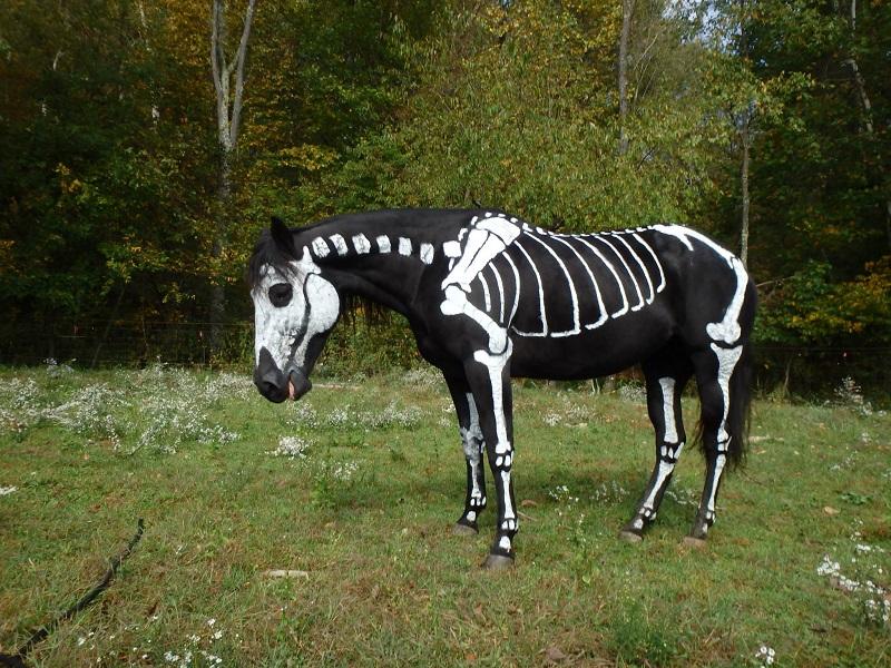 skeleton painted horse halloween (4)
