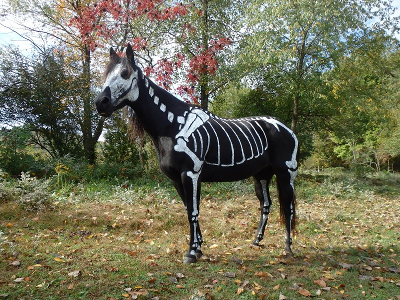 skeleton painted horse halloween 5 This Is Not A Parrot. Not Even Close