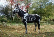 This Horse Wins Halloween