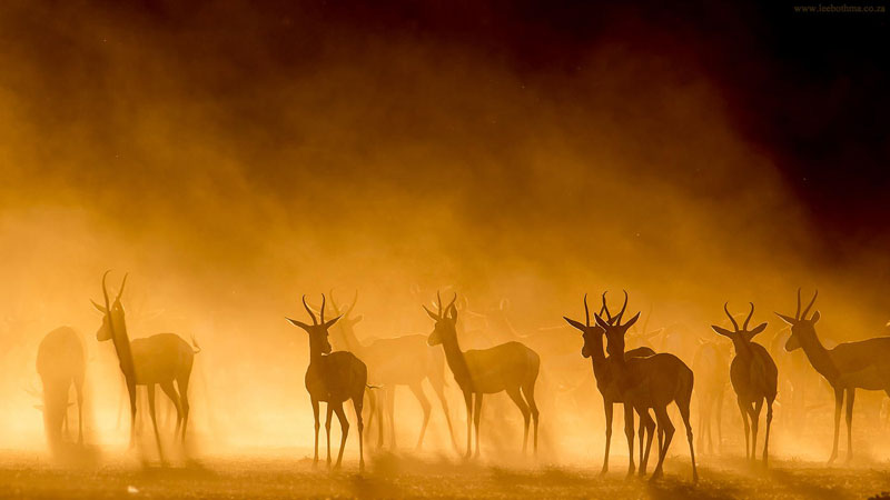 Picture of the Day: Antelopes in the Mist