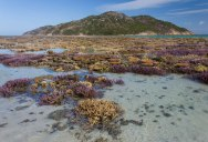 Picture of the Day: Coral Garden at Low Tide