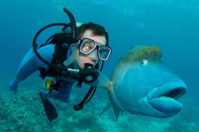 fish and scuba diver funny priceless expression The Top 100 Pictures of the Day for 2013