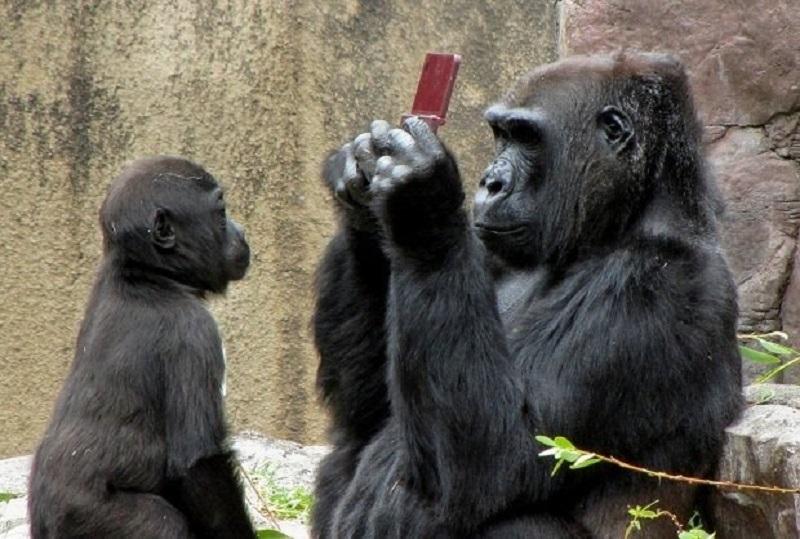 gorilla with nintendo ds