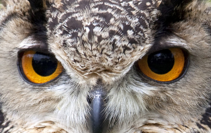 Picture of the Day: Owl Eyes