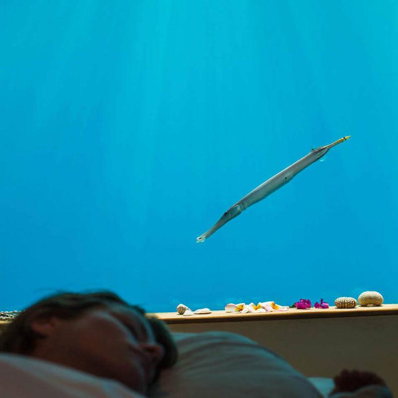 underwater hotel room pemba island tanzania africa (6)