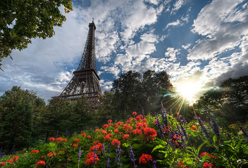 unique view of eiffer tower from below garden plants trey ratcliff Picture of the Day: Unique View of the Eiffel Tower
