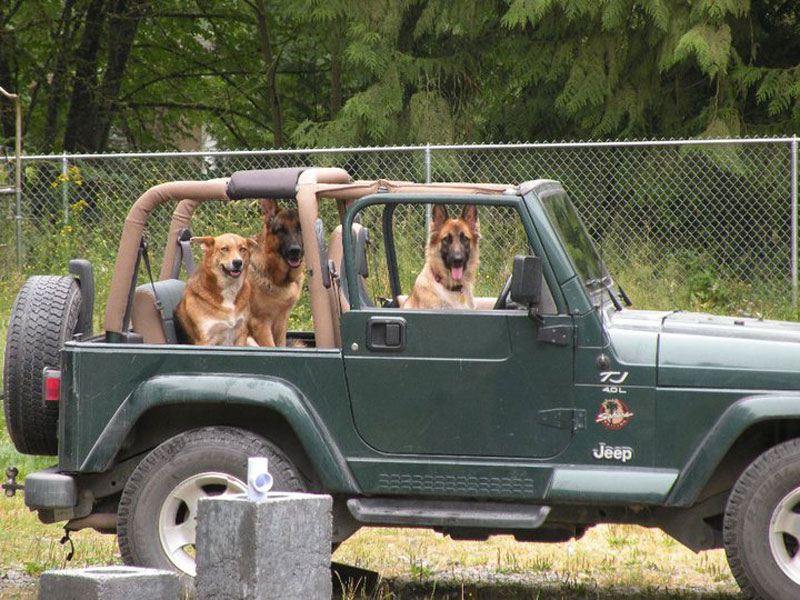who let the dogs out three dogs in a jeep The Shirk Report   Volume 240