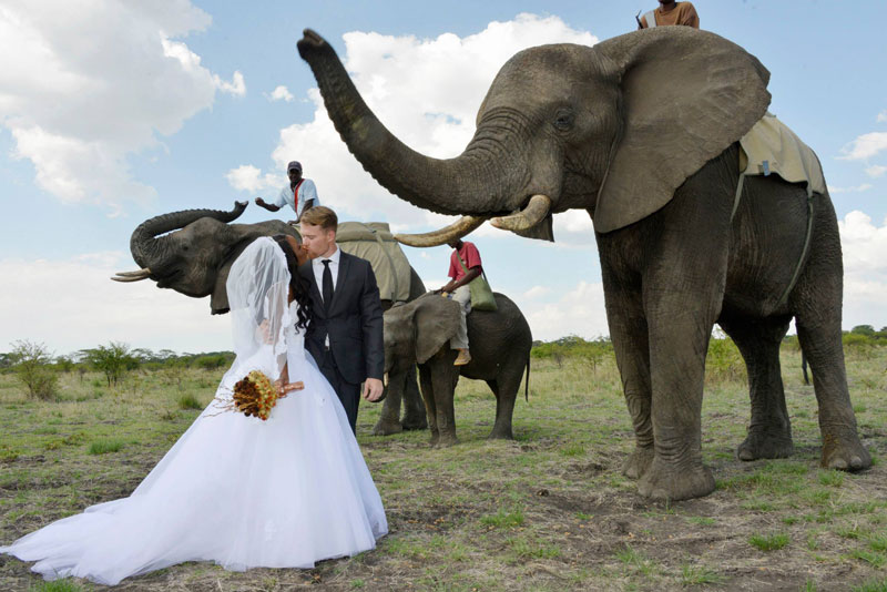 Couple Have Safari Wedding Surrounded by Elephants and Giraffes