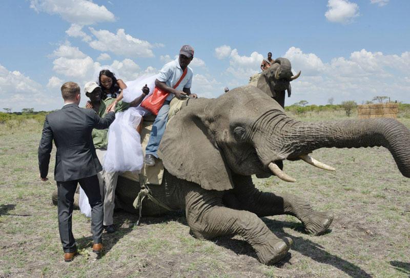 african safari wedding (4)