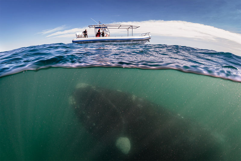 hofman right whale over under boat Picture of the Day: What Lurks Beneath