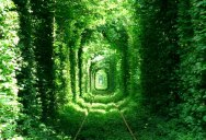 Picture of the Day: The Green Mile