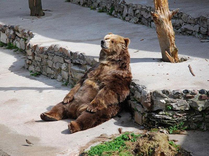 bearistotle thinking bear The Shirk Report   Volume 251